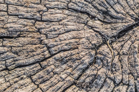 Photograph of old weathered cracked tree trunk cross section, detail  photo