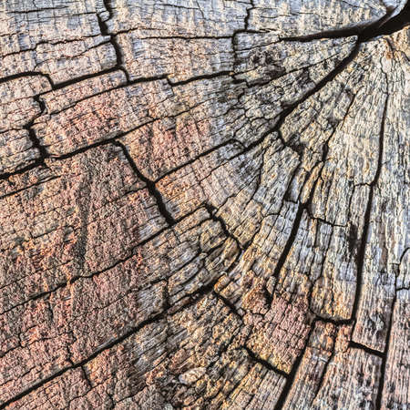 decomposition: Photograph of old weathered cracked tree trunk cross section, detail