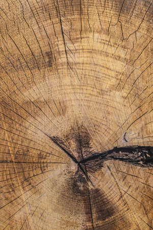 nature symbols metaphors: Photograph of old weathered cracked tree trunk cross section - detail  Stock Photo