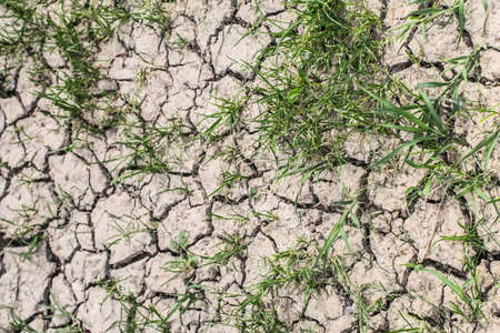 Photograph of desolate cracked soil with some patches of grass, on barren soil surface, reduced by summer scorching sun to lumps of dried mud  photo