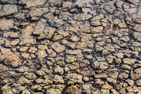 river bank: Photograph of flooded river bank, with barren, cracked soil, reduced by summer scorching sun to lumps of dried mud