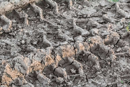 scorching: Photograph of a tire track print left in wet mud, visible on barren, cracked soil, reduced by summer scorching heath to lumps of dirt and dust  Stock Photo