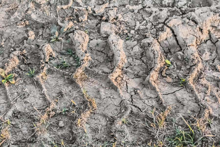 Photograph of a tire track print left in wet mud, visible on barren, cracked soil, reduced by summer scorching heath to lumps of dirt and dust  photo