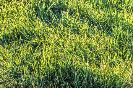 Blades of grass Imbued with the late afternoon sunlight  photo