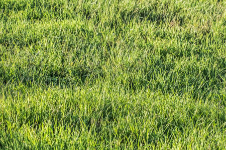 Grass field imbued with the late afternoon sunlight  photo