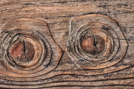 Old plank, with two big wood knots - twins, and cracked, layered rough surface, defined by annual growth lines  photo