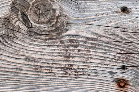 Old, weathered, rotten plank, with large wood knot, lateral cracks, drilled holes, lichen growth and embedded rusty pole barn screw  photo