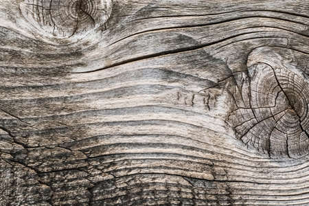 Old, weathered, rotten plank, with two large wood knots and rough textured, cracked, dilapidated surface  photo