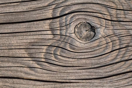 dilapidation: Old, rotten floorboard with extremely rough surface, lateral curved cracks and large wood knot - detail  Stock Photo