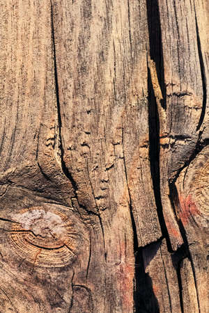 decomposition: Old, weathered, rotten plank, with rough, damaged surface, lateral cracks and lichen growth