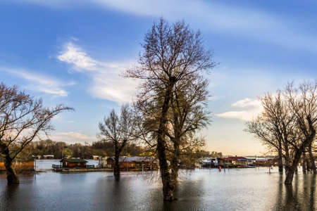Early spring photograph shot at dusk of risen Sava river water level, with floating houses along its banks, leafless trees canopies, and blue skies with fluffy white clouds  photo