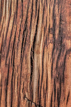 dilapidation: Old, weathered, rotten wooden railroad tie, with lateral curved cracks, and a cut mark