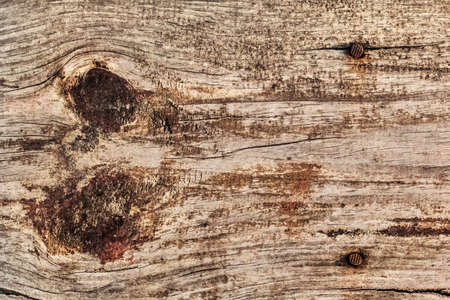 Photograph of old, weathered, rotten floorboard, with two large wood knots, lateral curved cracks and two embedded rusty nails - detail  photo