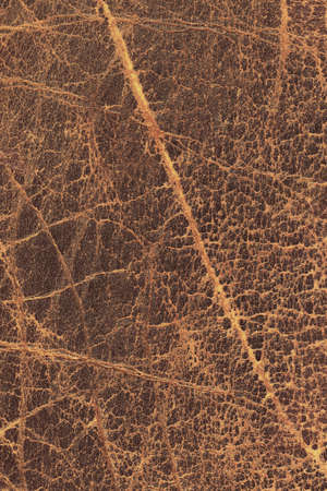 dilapidation: Photograph of old, weathered, rough, cracked, wrinkled, coarse grained, exfoliated cowhide texture sample