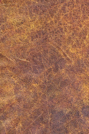 dilapidation: Photograph of old, weathered, rough, creased, coarse grained, exfoliated cowhide texture sample