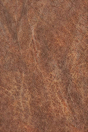 Photograph of old, weathered, rough, creased, coarse grained, crumpled, exfoliated cowhide texture sample