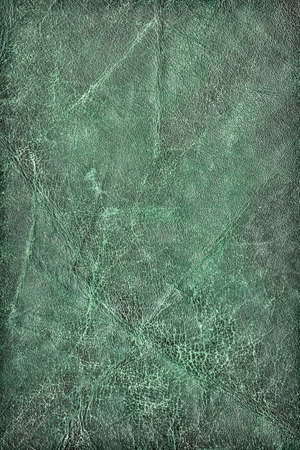 Photograph of old, weathered, rough, creased, coarse grained, crumpled, exfoliated green cowhide vignette texture sample