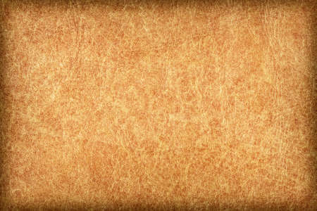mottled skin: Photograph of an old animal skin parchment, creased, coarse grained, mottled, Yellow Ocher, vignette grunge texture sample