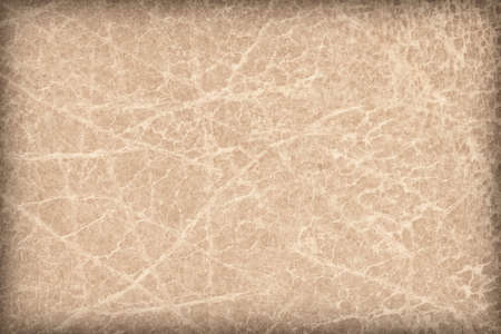 epithelium: Photograph of old, Beige Animal Skin Vellum, coarse grained, vignette grunge texture. Stock Photo