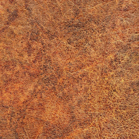 epithelium: Photograph of old Brown, weathered, rough, creased, coarse grained, exfoliated, mottled Cowhide grunge texture.