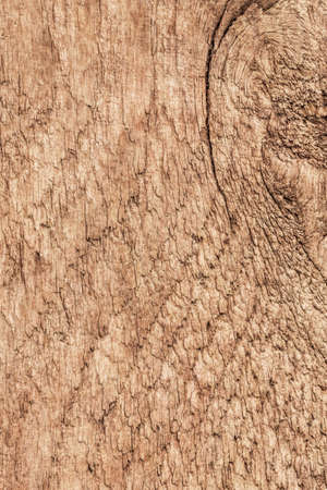 treated: Photograph of old, roughly treated, weathered, cracked, knotted Pine plank grunge texture.