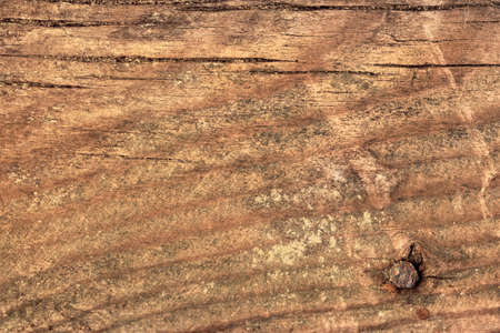 rusty nail: Photograph of an old, obsolete, roughly treated, weathered, cracked, knotted Pine plank grunge texture, with rusty nail driven in.
