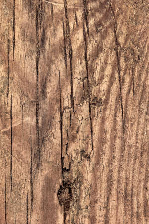 treated: Photograph of an old, obsolete, roughly treated, weathered, cracked, knotted Pine plank grunge texture. Stock Photo