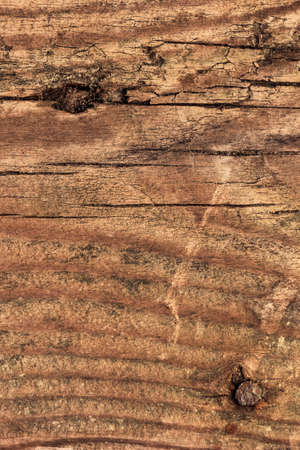 treated: Photograph of an old, obsolete, roughly treated, weathered, cracked, knotted Pine plank grunge texture, with rusty nail driven in.