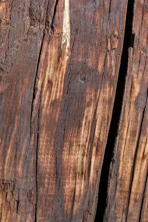 ravaged: Old Bituminous Weathered Cracked Rotten Wooden Railway Sleeper with traces of Bird Droppings.