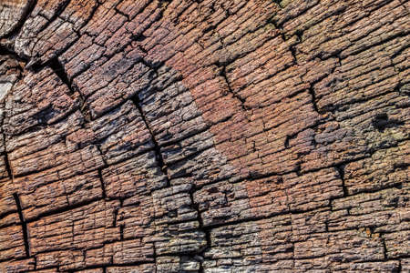 railroad tie: Top surface of an old, bituminous, weathered, rotten, Square Timber Bollard, made of obsolete, scrapped Railroad Cross Tie Timber, with some fungi, lichen and moss in traces.