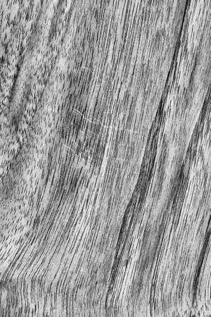 bleached: Walnut Wood Bleached Dark Gray Grunge Texture.