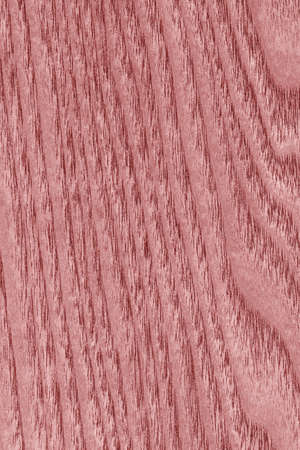 maple wood texture: Maple Wood Bleached and Stained Light Pale Red grunge texture.