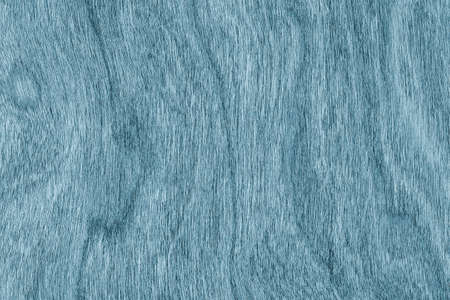 grunge wood: Cherry Wood Bleached and Stained Marine Blue Grunge Texture Sample.