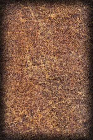 epithelium: Photograph of Old Natural Brown Cowhide, Weathered, Coarse, Creased, Exfoliated, Cracked, Vignette Grunge Texture Sample. Stock Photo