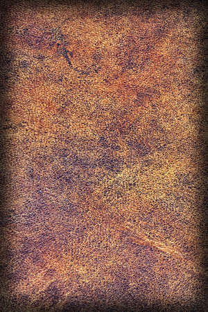 cowhide: Photograph of Old Natural Brown Cowhide, Weathered, Coarse, Creased, Exfoliated, Cracked, Vignette Grunge Texture Sample. Stock Photo