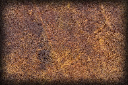 animal scale: Photograph of Old Natural Brown Cowhide, Weathered, Coarse, Creased, Exfoliated, Cracked, Vignette Grunge Texture Sample. Stock Photo