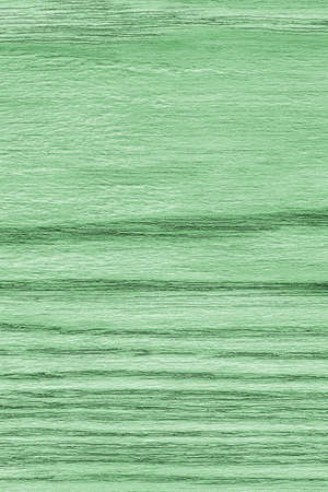 shellac: Oak Wood, Bleached and Stained Pale Kelly Green, Grunge Texture Sample. Stock Photo
