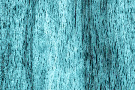 beech wood: Old Beech Wood Bleached and Stained Cyan, Grunge Texture Sample.