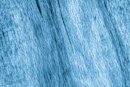 beech wood: Old Beech Wood, Bleached and Stained Blue, Grunge Texture Sample.