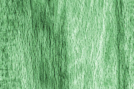 beech wood: Old Beech Wood, Bleached and Stained Pale Green, Grunge Texture Sample. Stock Photo