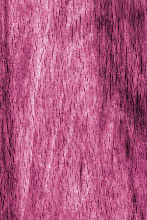beech wood: Old Beech Wood, Bleached and Stained, Magenta Grunge Texture Sample.