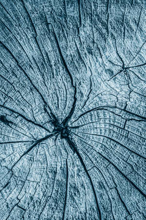 nature symbols metaphors: Old Stump, Weathered, Rotten, Cracked, Top Surface, Pale Dark Blue, Grunge Texture.