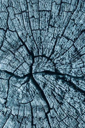 dilapidation: Old Stump, Weathered, Rotten, Cracked, Top Surface, Dark Pale Blue, Grunge Texture. Stock Photo