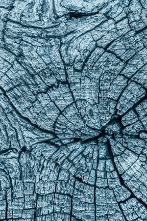nature symbols metaphors: Old Stump, Weathered, Rotten, Cracked, Top Surface, Dark Pale Blue, Grunge Texture. Stock Photo