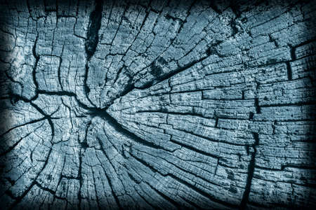 nature symbols metaphors: Old Stump, Weathered, Rotten, Cracked, Top Surface, Dark Pale Blue, Vignette, Grunge Texture.