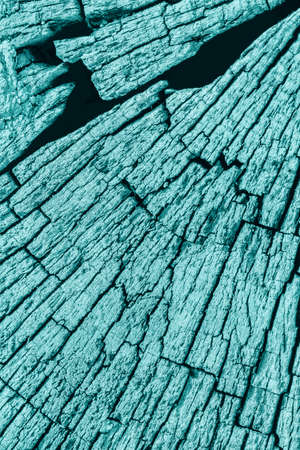 nature symbols metaphors: Old Stump, Weathered, Rotten, Cracked, Top Surface, Pale Cyan, Grunge Texture.