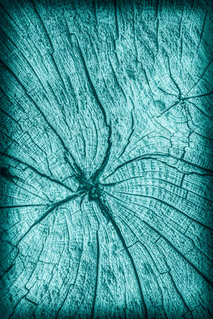 nature symbols metaphors: Old Stump, Weathered, Rotten, Cracked, Top Surface, Pale Cyan, Vignette, Grunge Texture.
