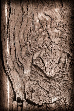 nature symbols metaphors: Old Knotted Wood, Weathered, Rotten, Cracked, Vignette, Grunge Texture. Stock Photo
