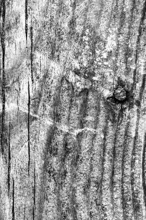 knotting: Old Wood, Gray Grunge Texture. Stock Photo