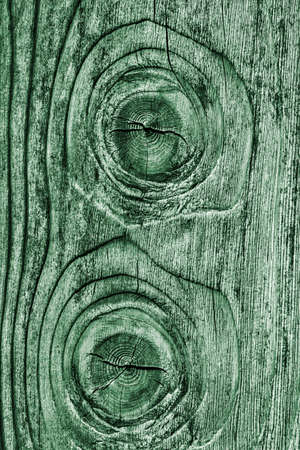 pale: Old Wood Pale Green Grunge Texture. Stock Photo